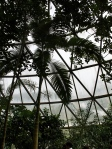 Tropical plant greenhouse