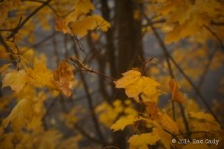 Fall Fog-1