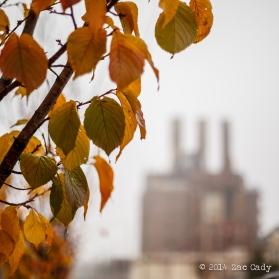 Fall Fog-14