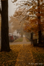 Fall Fog-2