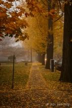 Fall Fog-4