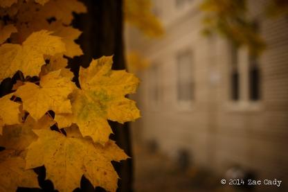 Fall Fog-6