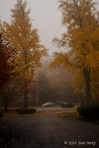 Fall Fog-8